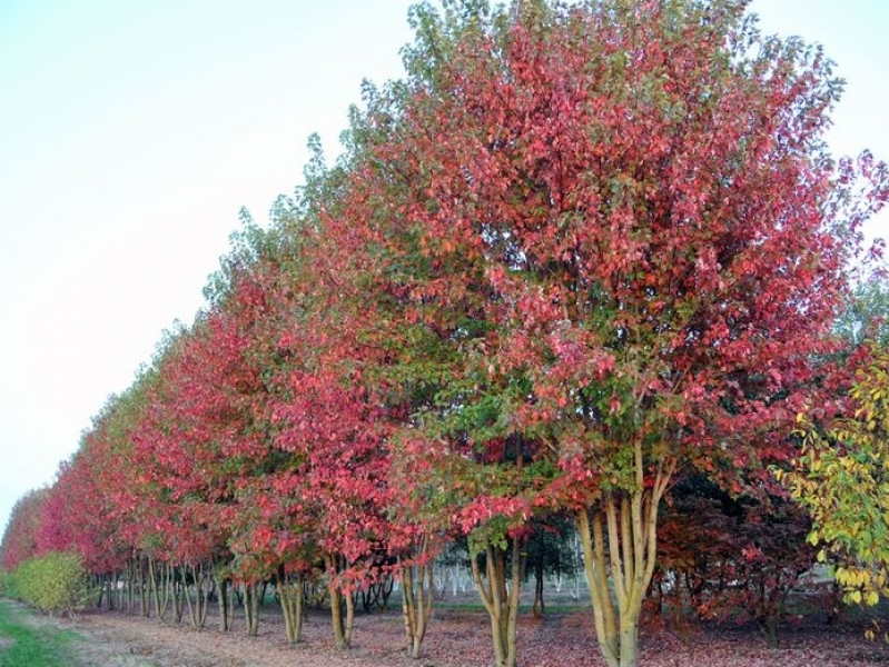 bomen kopen online